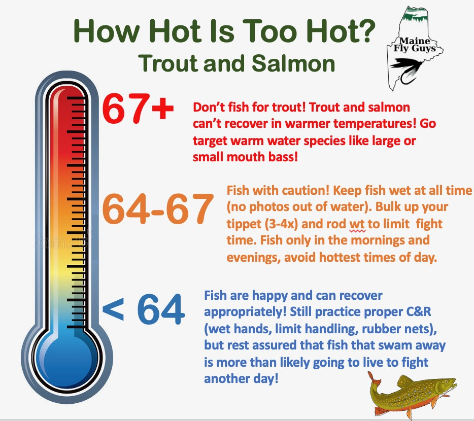 How to Catch Trout Safely In Warm Water